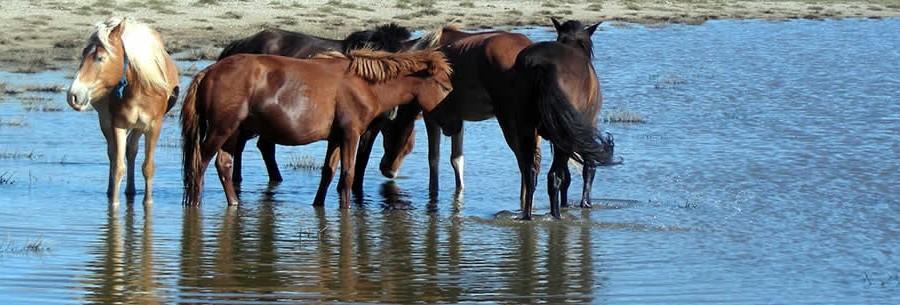 Prijzen coaching met paarden