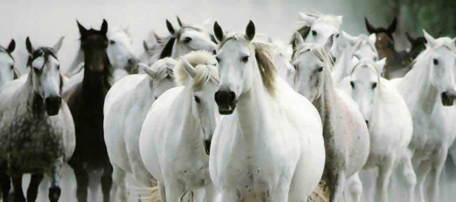 coaching met paarden in brabant