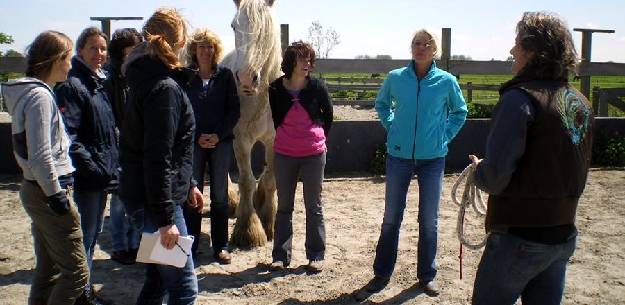 coaching met paarden voor groepen en teams