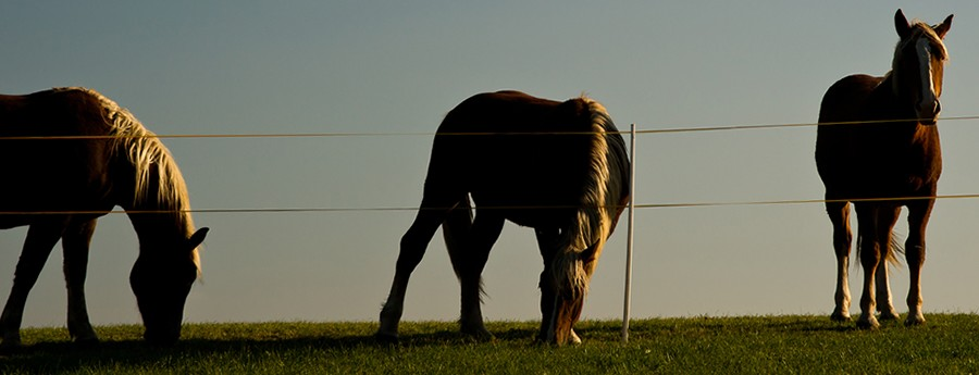 paardencoaching foto's