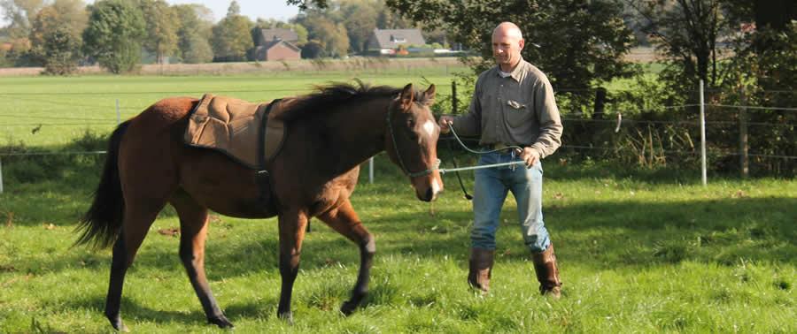 2 jarige hengst jack doet dienst bij paardencoaching