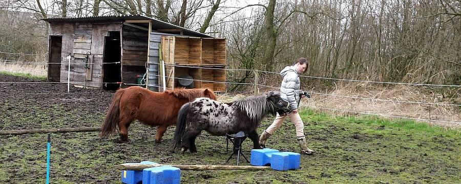 paard en kracht tienercoaching met paarden